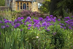 Fototapeta na ścianę fioletowy ogród fp 728