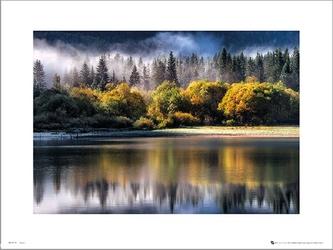 Forest autumn light - plakat premium