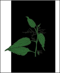 Pokrzywa nocą - plakat wymiar do wyboru: 42x59,4 cm