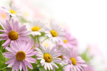 Fototapeta kwiaty 2215