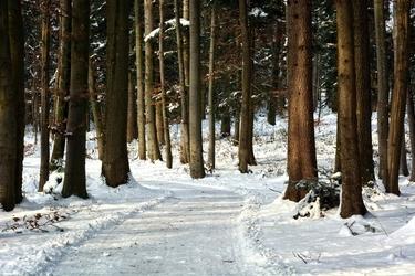 Fototapeta droga leśna pokryta śniegiem fp 1930