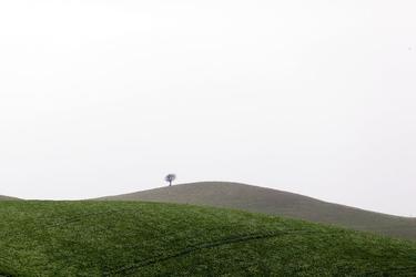 Fototapeta wzgórze z jednym drzewem fp 1492