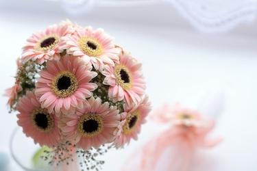 Fototapeta bukiet różowych gerberów fp 344