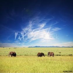 Obraz na płótnie canvas czteroczęściowy tetraptyk słonie
