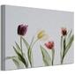 Tulipany - obraz na płótnie