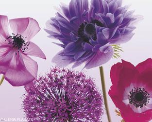 Purple Summer - Maki Chabry ... - plakat