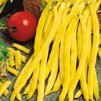 Fasola tyczna neckargold – żółta – kiepenkerl