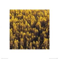 Jesienny las - reprodukcja