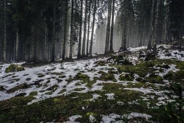 Fototapeta na ścianę ośnieżony leśny mech fp 3138
