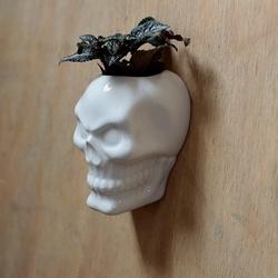 Czaszka - ceramiczny pojemnik na ścianę