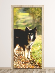 Fototapeta na drzwi pies na spacerze fp 2493 d