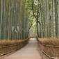 Plakat na papierze fotorealistycznym kioto bambusowy gaj