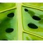 Dziurki w liściu - plakat wymiar do wyboru: 42x29,7 cm