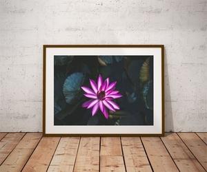 Lilia wodna - plakat premium wymiar do wyboru: 50x40 cm
