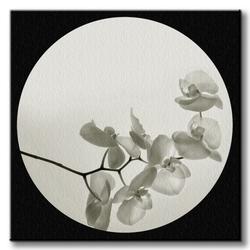 Orchid ii - obraz na płótnie