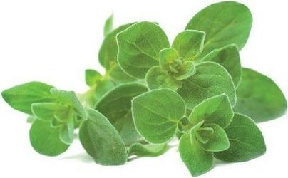 Kapsułki z nasionami smart soil 3 szt. oregano