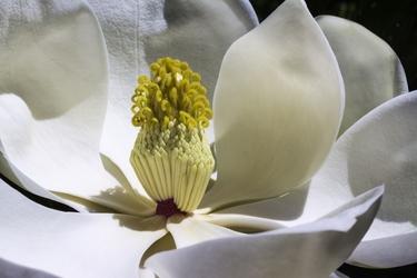 Fototapeta kwiat 383