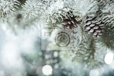 Obraz jodła oddział na śniegu