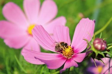 Fototapeta kwiat, kwiaty polne 331