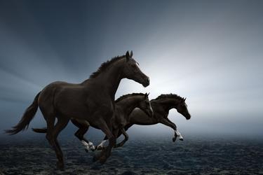 Fototapeta konie 1688