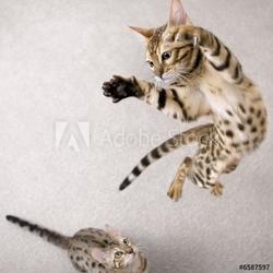 Tapeta ścienna skaczący kot