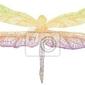Naklejka kolorowe ważki