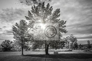 Fototapeta krajobraz z drzew, słońce świeciło, choć
