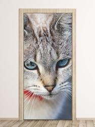 Fototapeta na drzwi kocie spojrzenie fp 2745 d