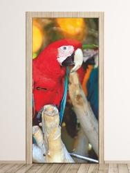Fototapeta na drzwi czerwona papuga fp 6212
