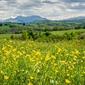 Łąka pełna kwiatów pireneje - plakat premium wymiar do wyboru: 29,7x21 cm