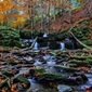 Kolory jesieni 3 - plakat premium