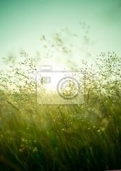 Plakat lato suchej trawy