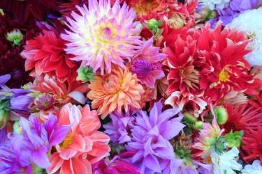 Fototapeta kwiat, bukiet 329