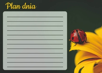 Plan dnia tablica suchościeralna biedronka 358