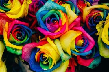 Fototapeta kwiat, bukiet róż 330