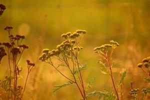 Fototapeta na ścianę jesienna roślinność fp 5630
