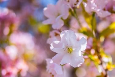 Wiosenne kwiaty - plakat premium wymiar do wyboru: 30x20 cm