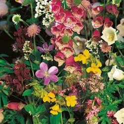 Kwiaty do cienia – mix nasion – kiepenkerl
