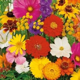 Kwiaty letnie – mix nasion – kiepenker