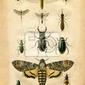 Plakat histoire naturelle: les owady