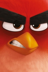 Angry birds red - film - plakat