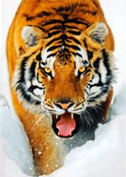 Tygrys Syberyjski w śniegu - plakat 3D