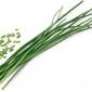 Wkład nasienny lingot zioła podstawowe szczypiorek