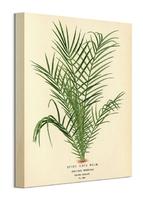 Spiny date palm - obraz na płótnie