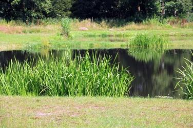 Fototapeta porośnięty brzeg jeziora fp 1651