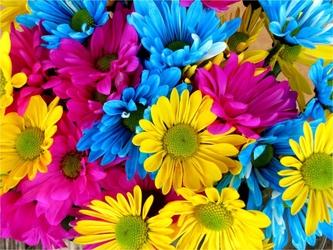 Fototapeta kwiaty 68