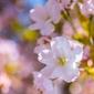 Wiosenne kwiaty - plakat premium wymiar do wyboru: 42x29,7 cm
