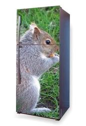 Fototapeta na lodówkę wiewiórka p41