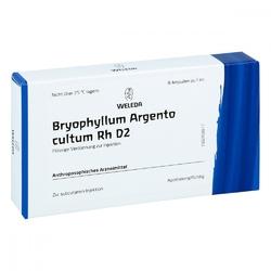 Bryophyllum argento cultum rh d 2 amp.