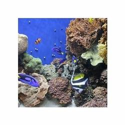 Monterey Aquarium 9 - reprodukcja